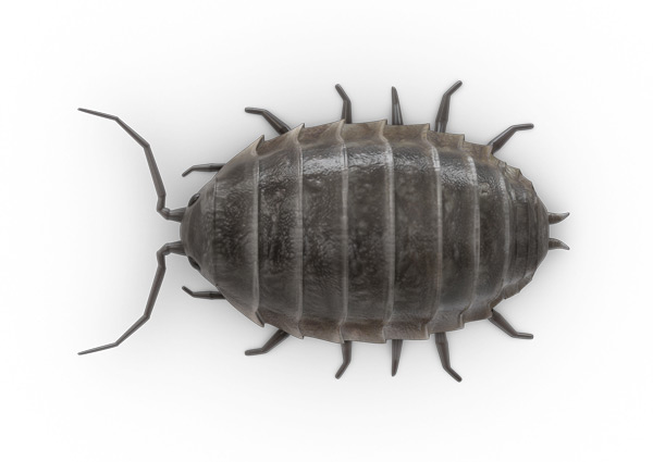 Sow Bug Top